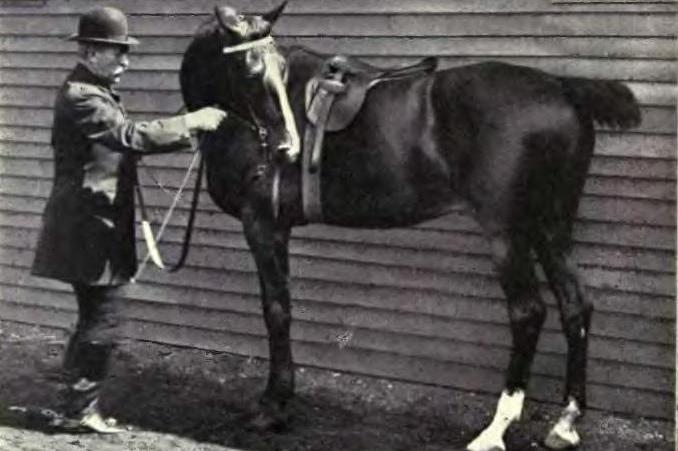 Equitation image