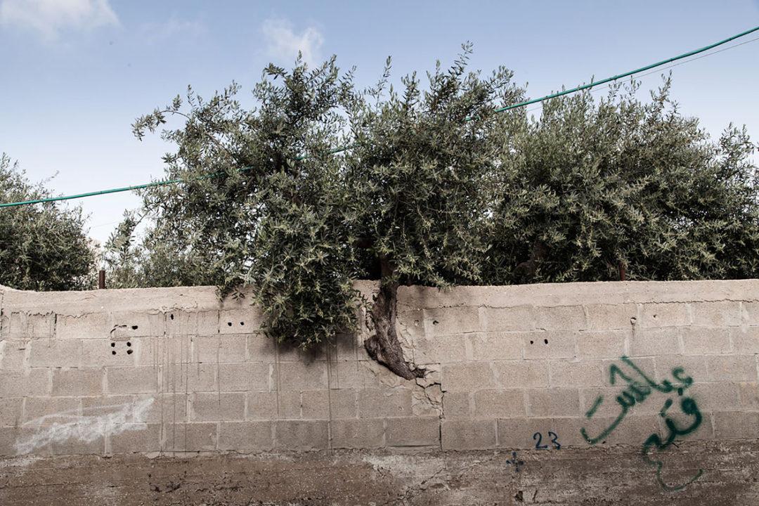 Le bulldozer et l'olivier image